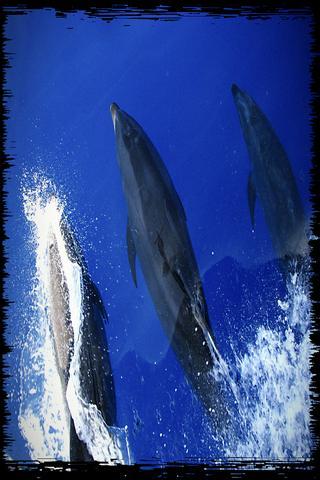 HD Dolphin Whale Wallpaper