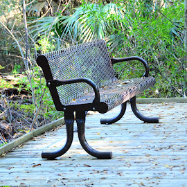 Park Bench in Lotus Park, Florida by Lorraine D.  Heaney - City,  Street & Park  City Parks