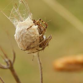 by Marijan Alaniz - Nature Up Close Hives & Nests
