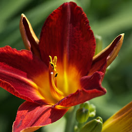 by Patricia Zollmann-Kissinger - Nature Up Close Gardens & Produce ( red, green )