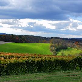 Galen Glen Winery Vineyard by Deborah Wagner - Landscapes Mountains & Hills