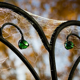 Cobwebs by Kristen McFeeters - Artistic Objects Other Objects ( cobweb, autumn, fall, shepherd hook, glass, wrought iron )