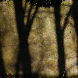 Shadow says by Marjan Bugarinović - Nature Up Close Rock & Stone ( nature, shadow, trees, meaning, language, letters, light, wall )