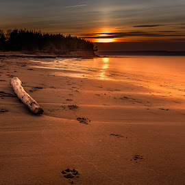 Only Pawprints  by Shawn Hudson - Landscapes Beaches ( canon, flash, srhpimaging, canon7d, shawnhud@gmail.com, sunset, ocean, seascape, beach, shawn hudson, battlemans beach, cape breton )
