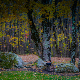 Southern Vermont Autumn by Nancy Merolle - Landscapes Forests ( autumn, colors, trees, forest, vermont, leaves, landscape, rocks, woods )