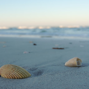 Under you foot by William Rhodes - Nature Up Close Sand ( water, sand, shell, sky, erosion, beautiful, beach )