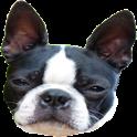 Dog Teaser