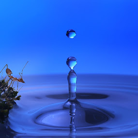 the blue compotition by Girdan Nasution - Abstract Water Drops & Splashes ( #abstrak #waterdrops #blue #ant )