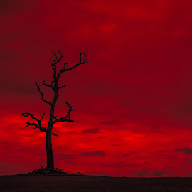 ... by Matheus Dalmazzo - Landscapes Prairies, Meadows & Fields ( clouds, field, ir, red, dry, tree )
