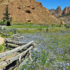 Spring Flowers at Smith Rock