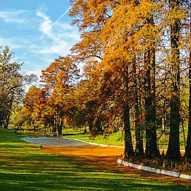 by Nedelcu Valeriu - City,  Street & Park  City Parks