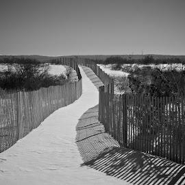 The Path by Frank DeChirico - Landscapes Prairies, Meadows & Fields ( fence, beach )