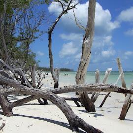 Quiet Cuban Beach by Tony Steele - Landscapes Beaches ( cuba beach )
