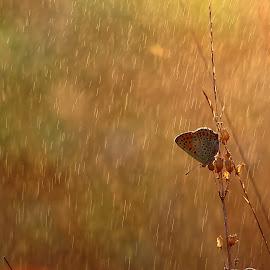 butterfly by Norbert Szenográdi - Novices Only Macro