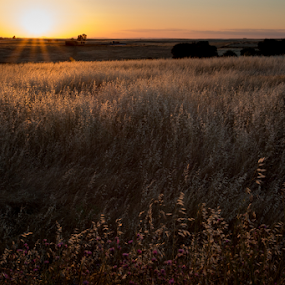 Extremadura #1 by Marsilio Casale - Landscapes Prairies, Meadows & Fields