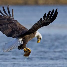 Fresh Fish by Rod Schrader - Animals Birds