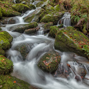 Šoštar's stream by Andrej Topolovec - Landscapes Waterscapes ( water, waterscape )