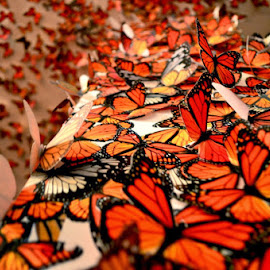 Butterflys by Joe Buck - Novices Only Objects & Still Life ( orange, urban exploration, nature, color, artistic )