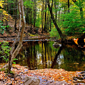 October Setting by Carl Testo - Landscapes Forests ( autumn, sleeping giant, mill river )