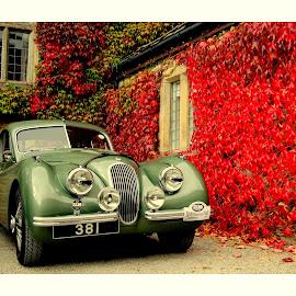Jaguar by Colin Waite - Transportation Automobiles ( jaguar car motor old classic )