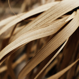 Swaying Grass by Erin Happenny - Nature Up Close Leaves & Grasses ( sepia, nature, flowing, grass, brown, dead grass, leaves )