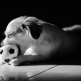 Oscar and the ball by João Gonzalez - Animals - Dogs Playing ( playing, ball, white, bw, puppie, small, mono, black )