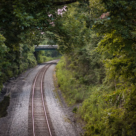 Around the Bend by Corey Nelson - Landscapes Forests ( nature, railroad, williamsburg, trees, virginia )