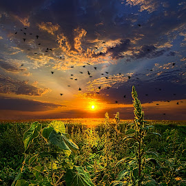In Flight by Phil Koch - Landscapes Prairies, Meadows & Fields ( vertical, photograph, farmland, yellow, leaves, wicounties, love, sky, tree, nature, weather, pine, flower, follow, orange, twilight, agriculture, horizon, forest, portrait, environment, dawn, serene, trees, floral, inspirational, natural light, wisconsin, ray, landscape, phil koch, sun, photography, farm, horizons, inspired, clouds, office, park, green, scenic, morning, woods, shadows, wild flowers, field, red, fog, blue, sunset, peace, meadow, landscapephotography, summer, beam, earth, sunrise, landscapes, mist,  )