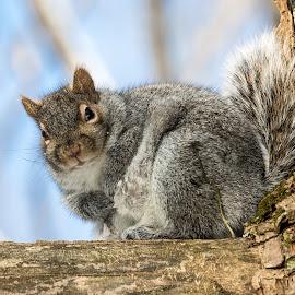by Steve Hogan - Animals Other Mammals