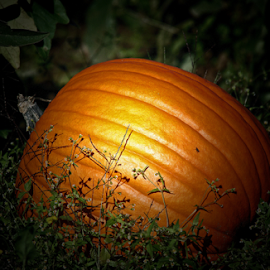 The Big Pumpkin by Janet Lyle - Nature Up Close Other Natural Objects ( pumpkin, autumn, fall, plants, halloween )