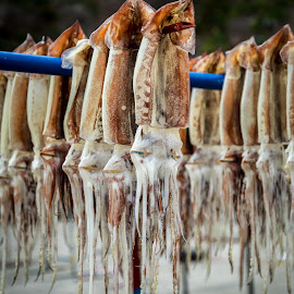 Drying Squid by Mark Prusiecki - Animals Sea Creatures ( seafood, sea, travel, squid fishing, ulleung island )