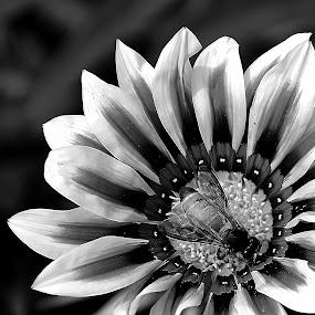by Saptarshi Datta - Black & White Flowers & Plants ( black and white, bee, garden, flower )