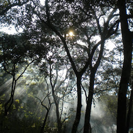 by R.P. Perera - Landscapes Forests ( earthly, nature, green, trees, forest, sunrise, scenic, natural, inspirational )