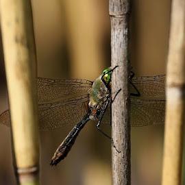 Hiding by Teija Kukkonen - Animals Insects & Spiders