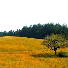 Yontockett Tree....(one of my favorite places in Del Norte County) by Michael Kozak - Landscapes Prairies, Meadows & Fields