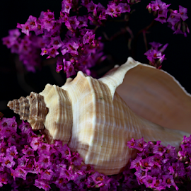 by Dipali S - Artistic Objects Other Objects ( shell, dried, still life, artistic, flowers )