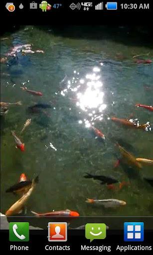【免費個人化App】Pond of Fish Donation-APP點子
