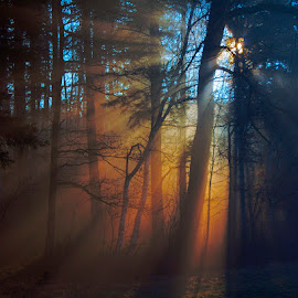 The morning in the forest by Ruda Stančík - Landscapes Forests ( fog, sunrays, forest, morning, rays, mist,  )