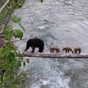 Watchful mom by Karl Jones - Animals Other Mammals (  )