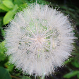 Weed Seeds Too by Thomas Barr - Nature Up Close Other plants