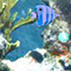 ACE: Under the sea icon