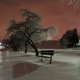 After the storm by Mario Monast - City,  Street & Park  City Parks ( lights, ice storm, icy, night photography, park, ice, trees, night time, night, night shot, nightscapes,  )