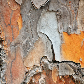 Bark Patterns by Timothy Graves - Abstract Patterns ( abstract, patterns, tree, color, bark )