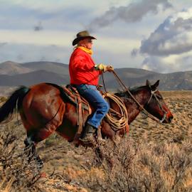 Cowboy by Dennis Ducilla - Animals Horses ( sagebrush, clouds, mountains, rider, cold, nevada, horse )