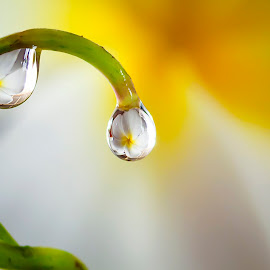 berduaan by Hitsugaya Syaiful - Nature Up Close Natural Waterdrops