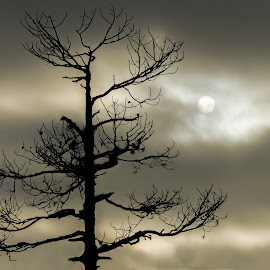 Hidden sun by Tzvika Stein - Nature Up Close Trees & Bushes ( clouds, tree, lapland, silhouette, finland, dusk, sun,  )