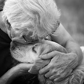 Goodbye My Friend by Pam  Kipper Gabriel - Animals - Dogs Portraits ( canine, old dogs, mans best friend, dog, golden retriever,  )