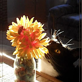Ninja and the Flower by Cherry Uhler - Animals - Cats Playing