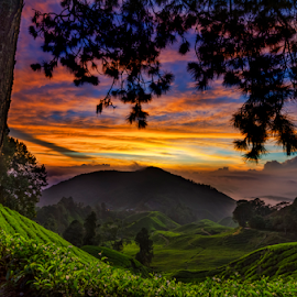 Cameron Highland by KIN WAH WONG - Landscapes Sunsets & Sunrises ( hill, cameron highland, sunrises, pahang, malaysia, scenery, landscapes )