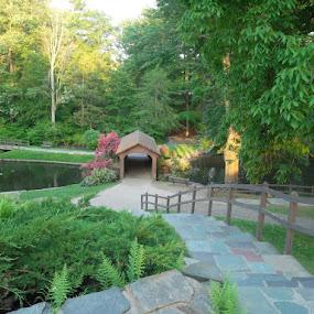 Stanely Park by Susan R Thomas - City,  Street & Park  City Parks